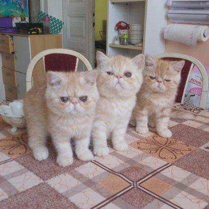 "Koťata vrh "" C """